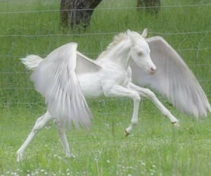 unicorn, tumblr, and pale image