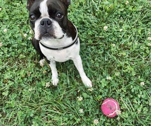 ball, outdoor, and puppy image