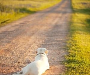 dog and road image