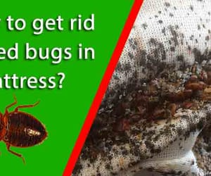 bed bugs control image