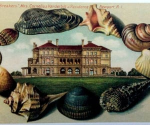 postcards, shell, and mollusks image
