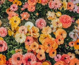 flowers, more flower, and and more flowers image