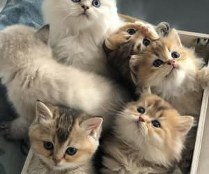 cat, animals, and kitty image