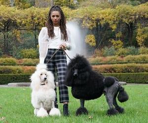 xoxo, poodles, and monet de haan image