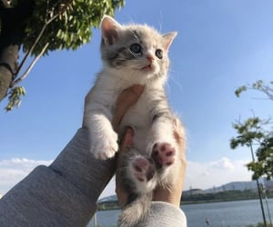 aesthetic, kitten, and nature image