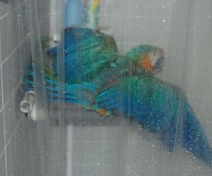 aqua, bird, and parrot image