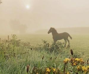 animals, autumn, and beautiful image