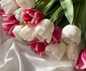 beauty, tulips, and take care image