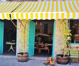 dog, visit greece, and Greece image