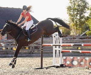 equestrian, ride, and equine image
