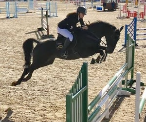 equine, jump, and equestrian image