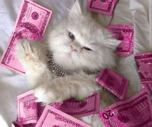 cash, cat, and girly image