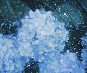 blue, rain, and flower image