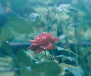 flower, flowers, and rain image