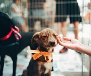 doggy, dogs, and dogoftheday image