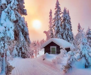 beautiful, forrest, and ice image