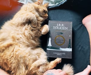 analog, cats, and london image