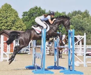 black, equestrian, and ride image
