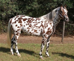animal, beauty, and brown image
