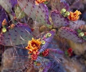 flores, natureza, and 🌵 image