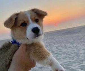 adorable, animal, and photography image