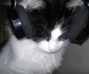 cat, headphones, and kitty image