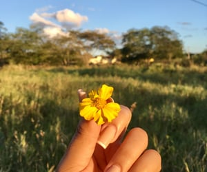 flowers, nails, and photography image