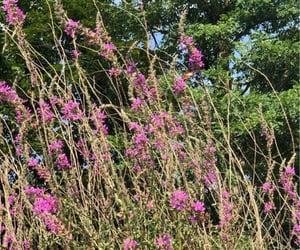 backyard, lavender, and plants image