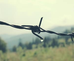 Barbed Wire, green, and prairie image