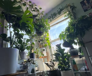 green, hanging plants, and greenhouse image
