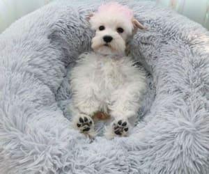 love doge pet animel bed image