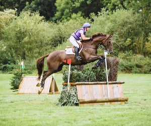 chestnut, crazy, and jump image