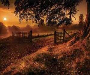 autumn, nature, and sun image