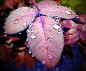 rain drops image