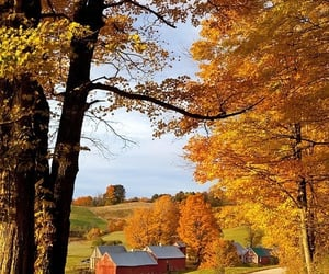 barn, country, and leaves image