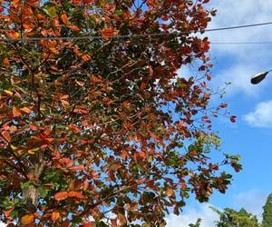 autum, fall, and nature image
