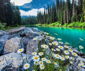 flowers, aesthetic, and lake image