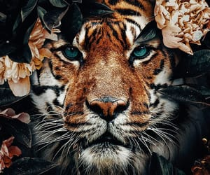 animals, stunning, and beautiful image