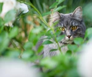 cat-friendly plants image