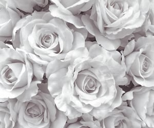 aesthetic, white, and details image