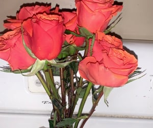 love sucks, orange roses, and i miss you so much image