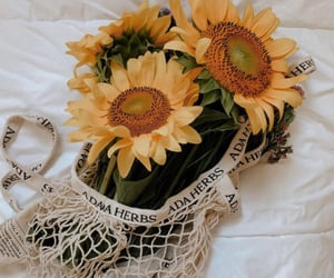 aesthetics, bouquet, and herbs image