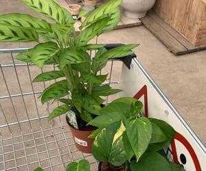 green, plants, and pot plants image
