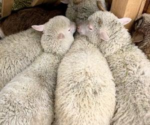 adorable, animal, and vegan image