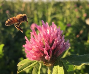 bees, pastures, and beorn image