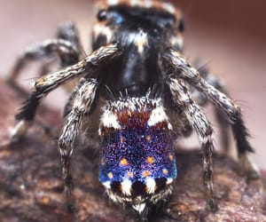 animal, nature, and spider image