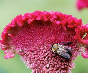 bees, flower, and pink image