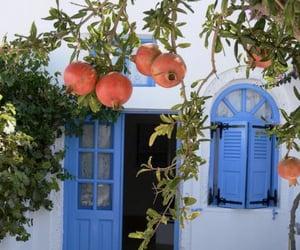 pomegranate, fruit, and summer image