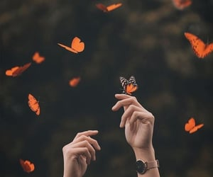 butterfly, aesthetic, and hands image