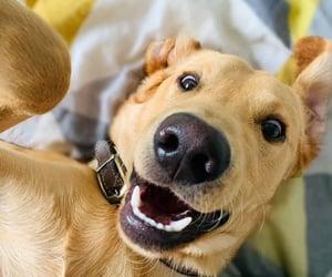 animals, dog, and puppies image